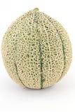 Melon fly Stock Photography