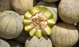 Melon fruit. The close-up of green melon Stock Photos