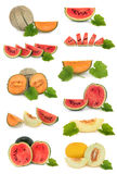 Melon Fruit Collection royalty free stock photography