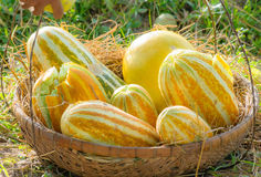 Melon fruit in straw basket Stock Images