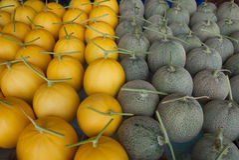 Melon fruit Stock Photography