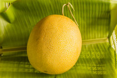 Melon gold Stock Photography