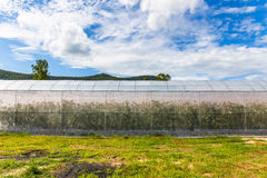 Melon Greenhouse. In the farm Stock Images