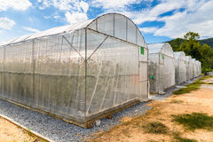 Melon Greenhouse. In the farm Royalty Free Stock Photo