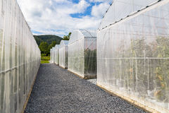 Melon Greenhouse. In the farm Royalty Free Stock Image