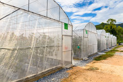 Melon Greenhouse. In the farm Stock Photography