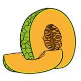 Melon - handen drog frukter isolerade vektorn Royaltyfri Bild