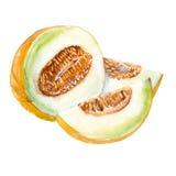 melon Isolado Ilustração da aguarela Foto de Stock