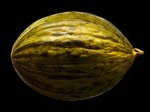 Melon isolated on black background Stock Images