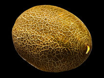 Melon isolated on black background. With clipping path Royalty Free Stock Images
