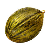 Melon isolated on white background. Stock Image