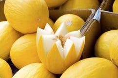 Melon jaune canari Photographie stock