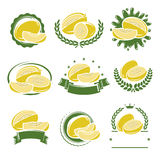 Melon labels and elements set. Vector Royalty Free Stock Photography