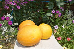Melon mûr Image stock