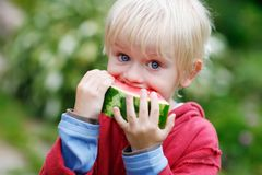 Melon Munching Stock Image
