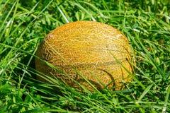 Melon na zielonej trawie fotografia royalty free