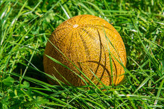 Melon na zielonej trawie, outdoors zdjęcia royalty free