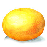 Melon på vit bakgrund stock illustrationer