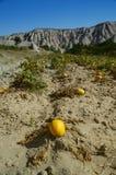 Melon-/pumpaträdgård i cappadocia Royaltyfri Bild
