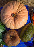 Melon and Pumpkin in autumn fall at market Royalty Free Stock Image