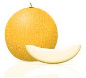 Melon ripe juicy vector illustration Stock Image