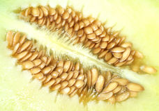 Melon seed Stock Photos