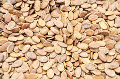 Melon seeds Stock Photography