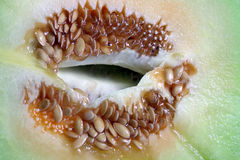 Melon seeds. Macro melon seeds, food and nutrition at summer Royalty Free Stock Photo