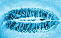 Melon seeds close up Stock Image