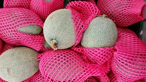 Melon on sell. Row melon food on sell Stock Image