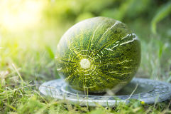 Melon in siver plate on grass Royalty Free Stock Photography