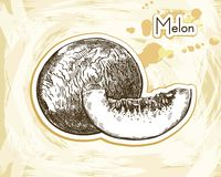 Melon sketch Stock Images