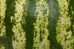 Melon stripes Royalty Free Stock Photo