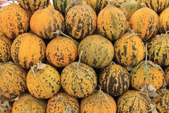 Melon sweet summer harvest Stock Photos
