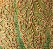 Melon texture Stock Images