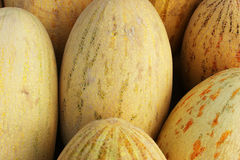 Melon texture. Melon background, large yellow melon texture Royalty Free Stock Image
