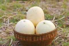 Melon thailand / Melon in a basket . Melon thailand / Melon in a basket Royalty Free Stock Photos