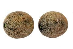 Melon. tropical fruit Royalty Free Stock Photos