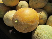Melon. Various size of melons in the bazaar royalty free stock image