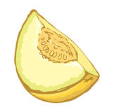 Melon. Vector drawing Royalty Free Stock Images