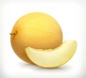 Melon vector icon Stock Photos