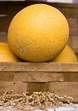 Melon in wood box. Melon in fruit & vegetables shop Stock Image