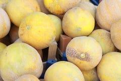 Melone Immagini Stock Libere da Diritti