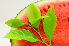 Melone Fotografie Stock Libere da Diritti