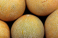 Melone Fotografia Stock Libera da Diritti
