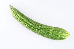 Melone amaro Immagini Stock