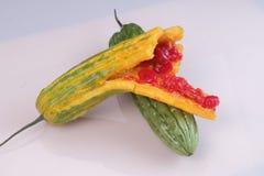 Melone amaro o zucca amara su fondo bianco Chiuda sulla vista fotografia stock libera da diritti