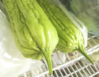 Melone amaro verde Fotografia Stock