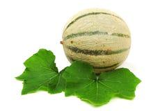 Melone del cantalupo fotografie stock
