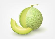 Melone del cantalupo, illustrazione di vettore della frutta Fotografie Stock Libere da Diritti